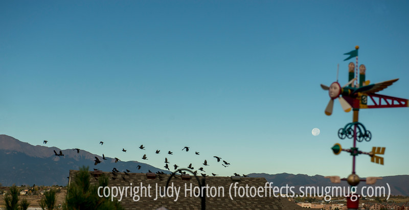 Birds, the Moon and a Weathervane in Early Morning