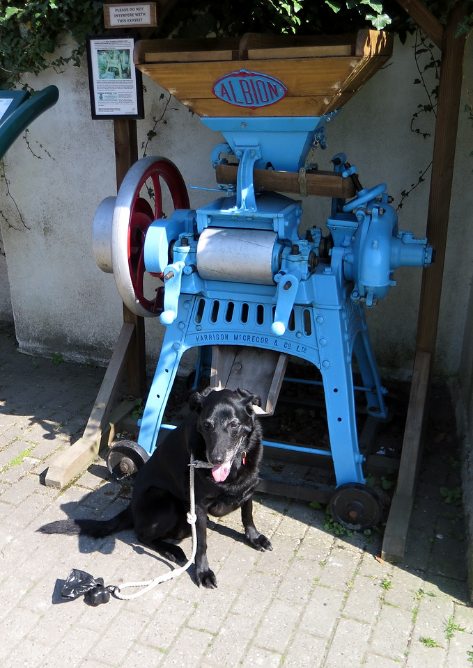 On to Modbury and here Lucy is modelling in front of a Mangle Masher (OK, if you know better let me know!)