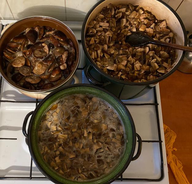Boiling mushrooms