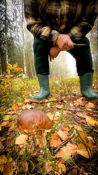 Camouflaged mushroom