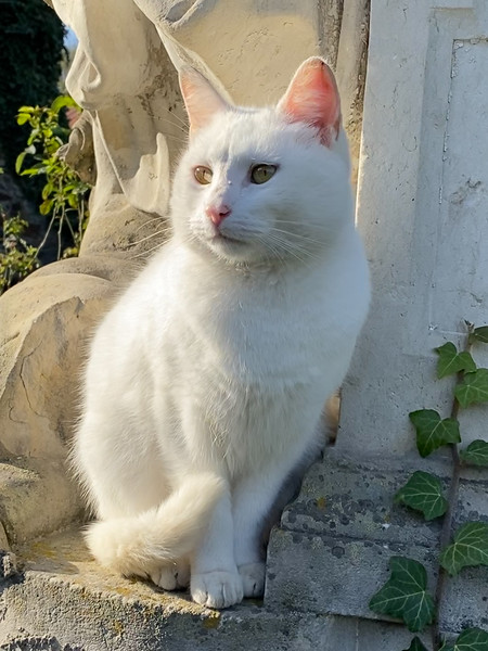 Resident Cat of Czocha Castle