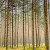 The Forest in Czerwona Woda