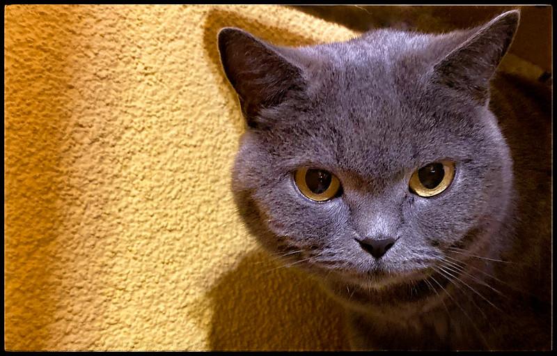 Luna the Cat