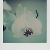 orchidf2bcloseup