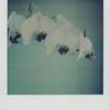 fadetoblackorchids