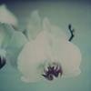 orchidf2bcloseupnoborder