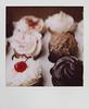 cupcakesstraight