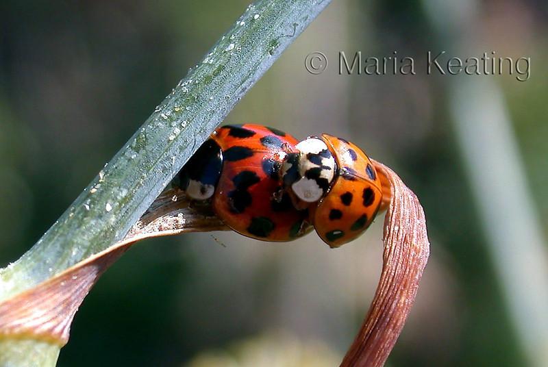 Love Bugs.