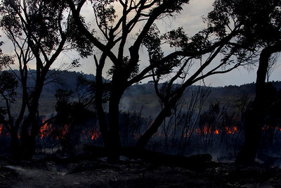 perscribed habitat burning, Oz