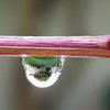 Aung Win - Water Droplet with Tree inside