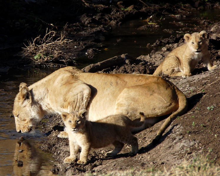 Mark Fantino - Mama with cubs
