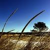 Andrew McDonagh - Barley on the Beach