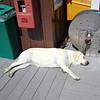 lazy dog!