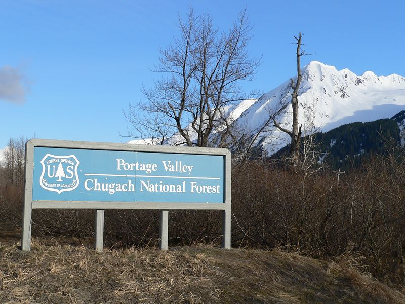 Portage Valley is part of the Chugach National Forest; so are the mountains, lakes, and rivers of the Kenai Peninsula, the islands and glaciers of Prince William Sound, and the wetlands and birds of the Copper River Delta near Valdez.