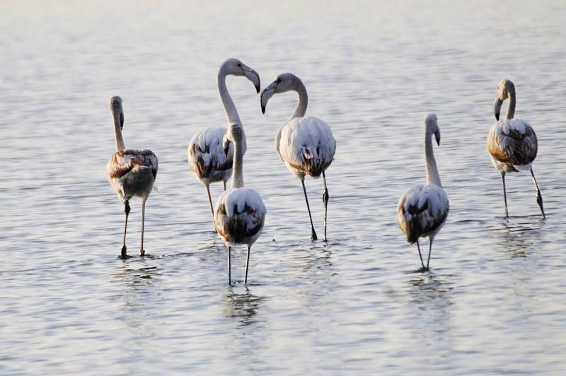 Aves da Ria