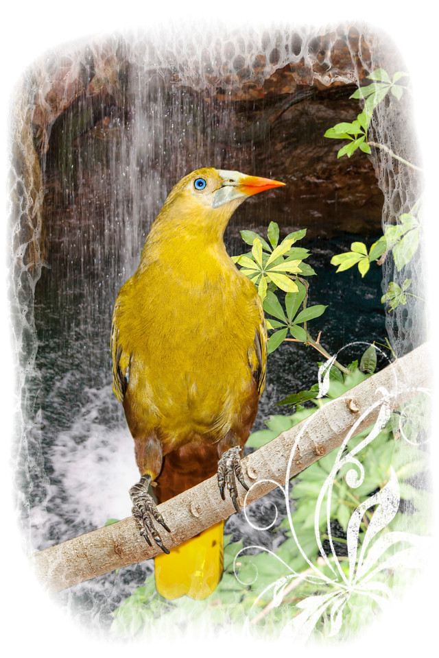 yellow bird with frame
