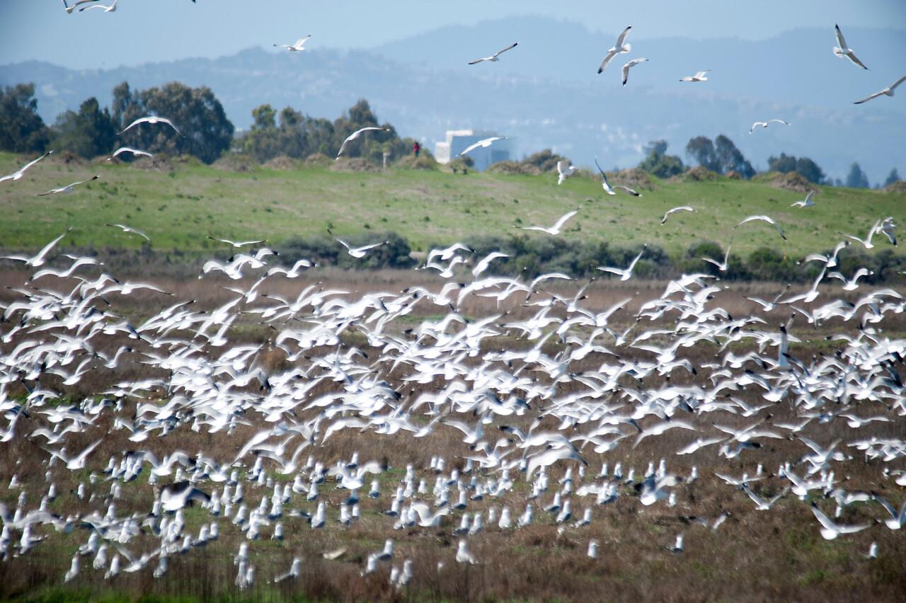 Gull Chaos