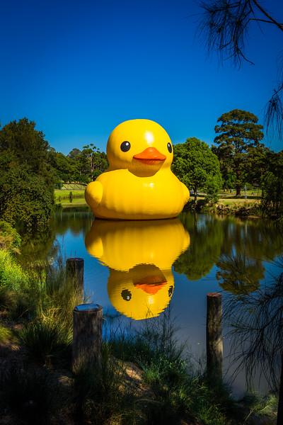 Parramatta Park, Sydney