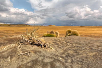 (2770) Rangipo Desert, New Zealand