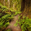(2159) Beech Forest, Victoria, Australia