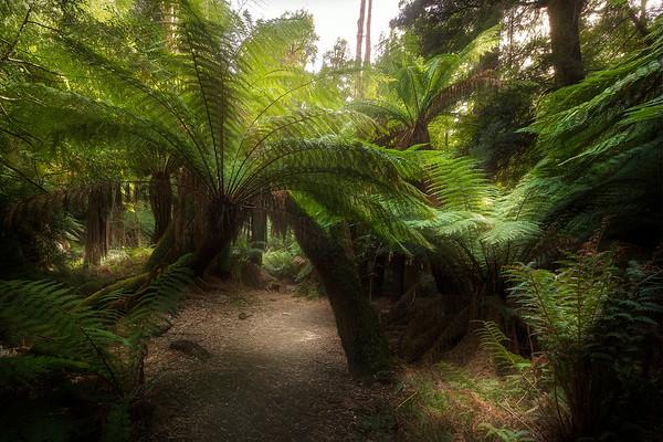 (3045) Liffey Falls, Tasmania, Australia