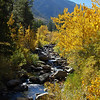 Small stream off the Carson River is also alive with color as it makes it's way toward Carson Valley.