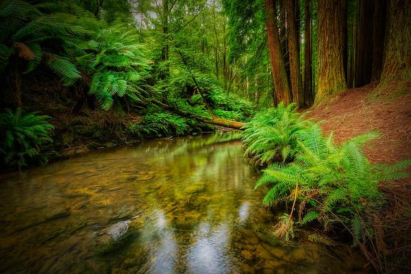 (1956) Beech Forest, Victoria, Australia