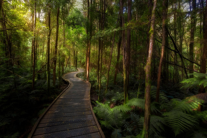 (2485) Nelson Falls, Tasmania, Australia