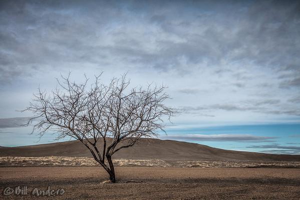 Bruneau Tree