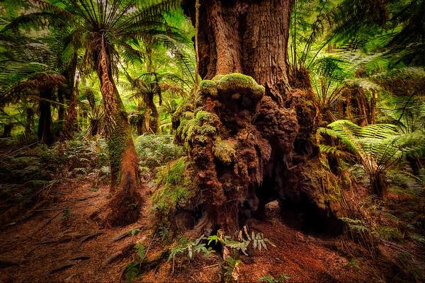 (2367) Maits Rest, Victoria, Australia