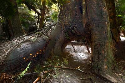 (Image#3147) Maits Rest, Victoria, Australia