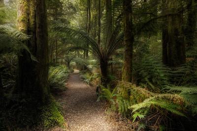 (Image#3398) Melb Gully, Victoria, Australia
