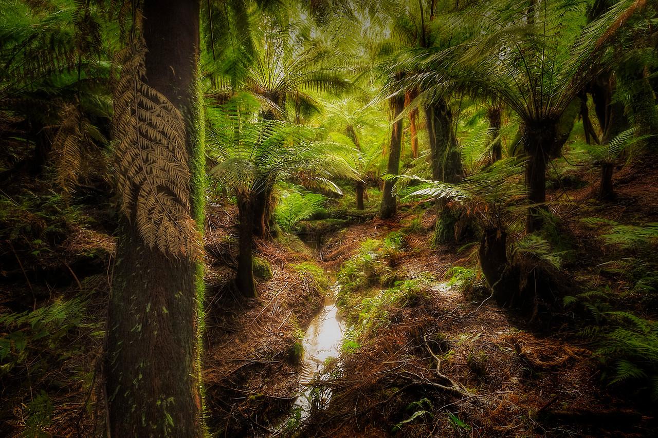 (2141) Maits Rest, Victoria, Australia