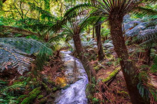 (1833) Melba Gully, Victoria, Australia