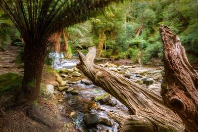 (2748) Liffey Falls, Tasmania, Australia
