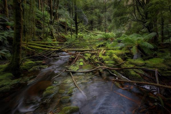 (2500) Nelson Falls, Tasmania, Australia