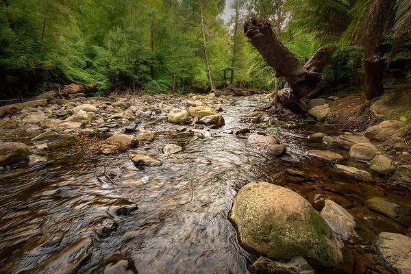 (3035) Liffey Falls, Tasmania, Australia