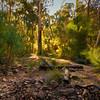 (2347) Silverband Falls, Victoria, Australia