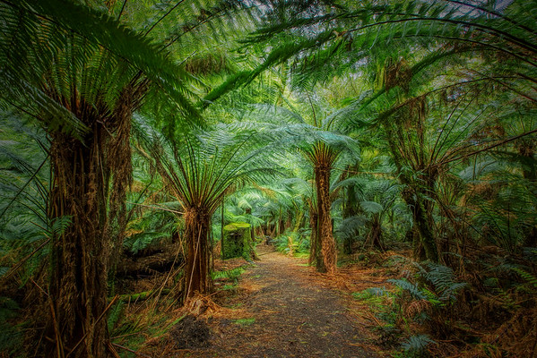 (1852) Melba Gully, Victoria, Australia