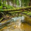 (1916) Beech Forest, Victoria, Australia
