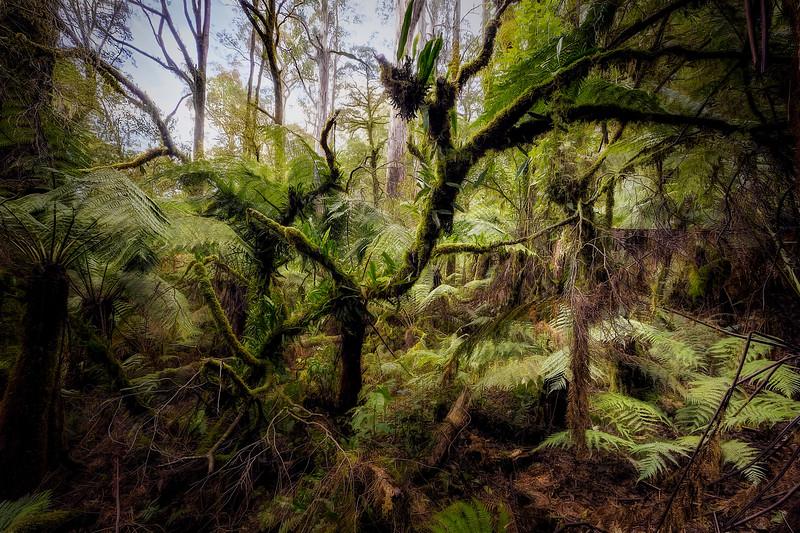 (2588) Triplet Falls, Victoria, Australia