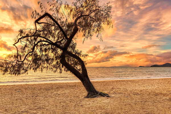 (2110) Palm Cove, Queensland, Australia