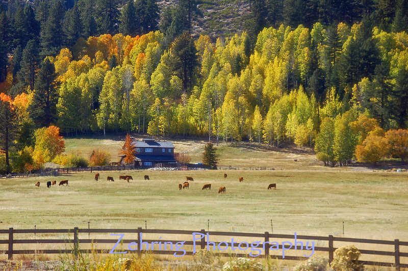 Aspens accent the mountain backdrop on this cattle ranch near the Nevada-California border.