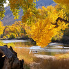 A special fall capture on the banks of the Carson River.