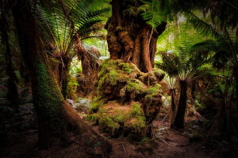 (2320) Maits Rest, Victoria, Australia