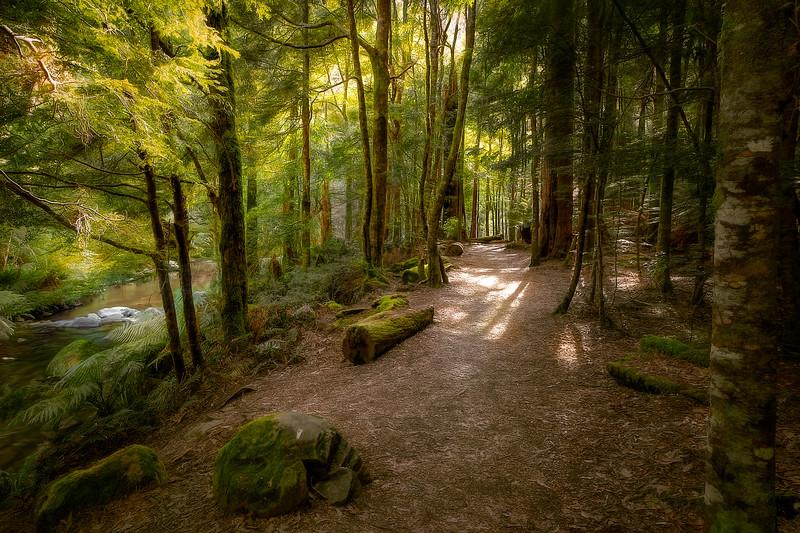 (2506) Liffey Falls, Tasmania, Australia