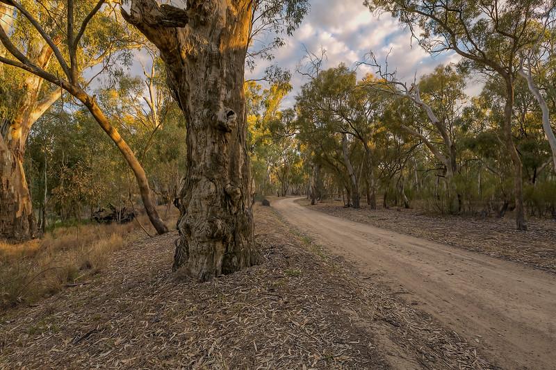 (2598) Murray River, Victoria, Australia