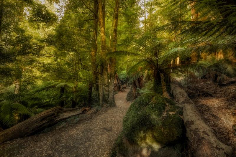 (2539) Liffey Falls, Tasmania, Australia