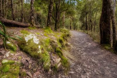 (2696) Liffey Falls, Tasmania, Australia