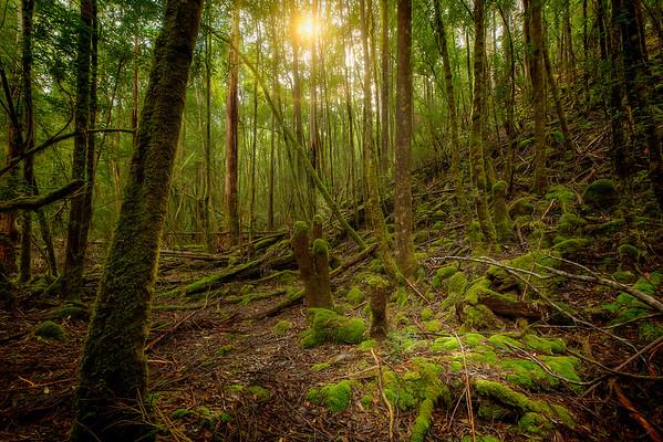 (1408) Mount Field National Park, Tasmania, Australia